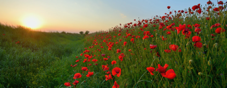 Remembrance Day: Close To Our Hearts